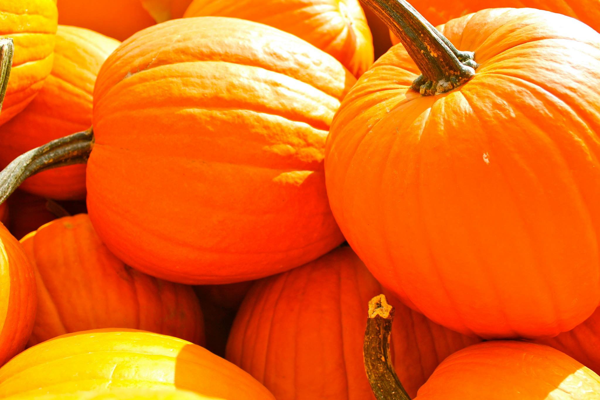 Its Fall Ya'll: Autumnal Happenings @ the Market