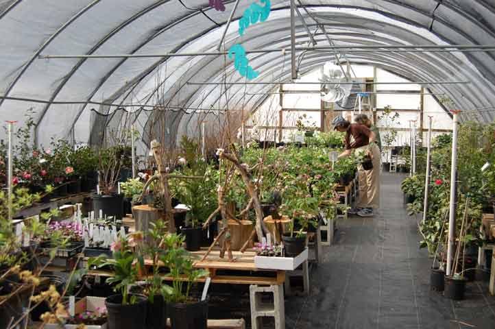 New Garden Landscaping Greensboro : Flowers plants greensboro farmers curb market