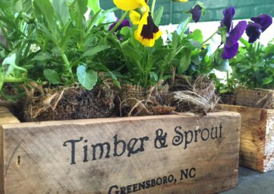 Timber & Sprout